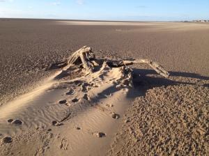 A dinosaur in the sand
