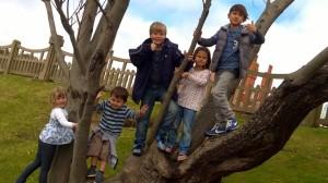 A tree climbing gang